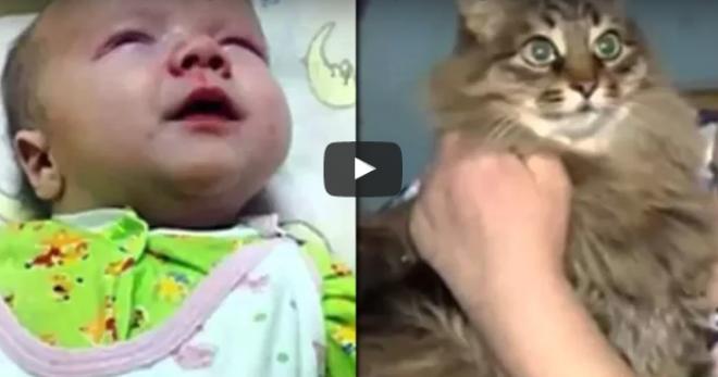Egy macska mentette meg a dobozban utcára tett kisbabát! VIDEÓVAL!