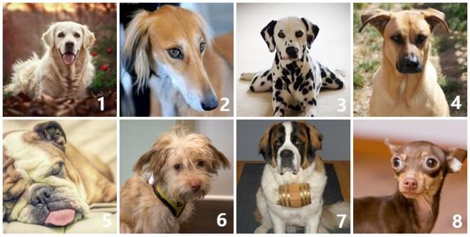 Sokat elárul a személyiségedről, hogy a 8 kutyából melyiket vinnéd haza!