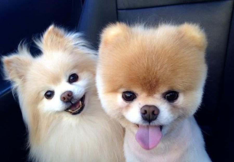 A csillagjegyed szerint ilyen kutya illik hozzád